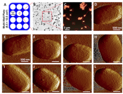 Automated multi-sample acquisition and analysis using atomic force microscopy for biomedical applications